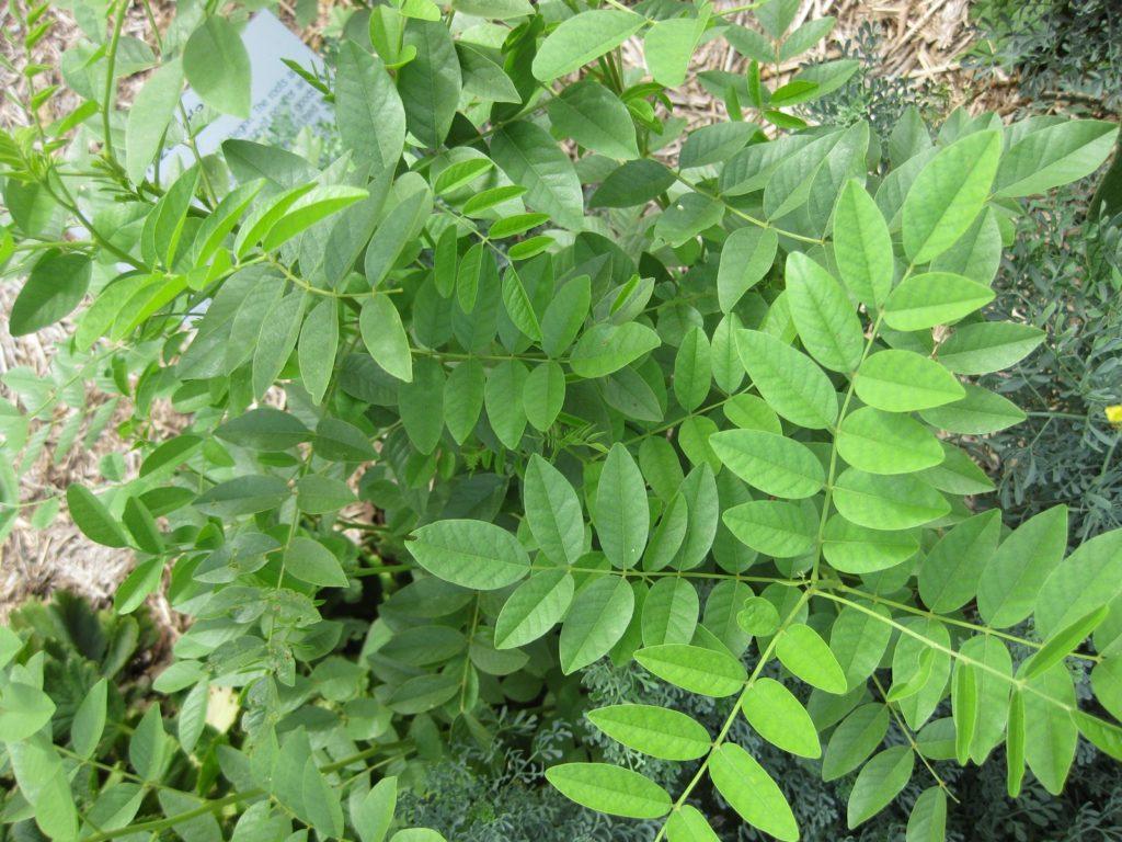 Raffi Kojian gardenology.org